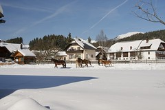 Bauernhof (Yacenty) Tags: sky heaven horse sun bauernhof austria winter snow
