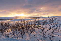 Sunset in the sub-arctic (George Pachantouris) Tags: iceland north arctic cold winter snow white ice frozen freeze sunset nordics