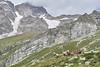 IMG_2137 (kevindalb) Tags: italia italy italie monte rosa valsesia piemonte montagna mountain ghiacciaio glacier cow vacca vache bruna alpina