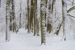 snowy forest (JossieK) Tags: forest winter wonderland trees path simplepleasures white flickrfriday silence peaceful scenery