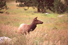 Colorado (bpwilby) Tags: 100speed 35mm chrome film fuji fujivelvia100 fujifilm nikon nikonf4 rockymountainnationalpark slide slidefilm summer usa velvia west co colorado e6 fujichrome positive
