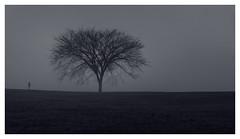 Through the mist (bprice0715) Tags: canon canoneos5dmarkiii canon5dmarkiii landscape landscapephotography nature naturephotography beautiful beauty beautyinnature mist fog tree monochrome mono blackandwhite blackwhite dark mysterious mystical mystique gloomy bw