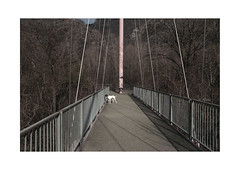untitled (loose dog on a suspended bridge) by walterstolz -