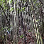 Journey to the 400 foot Waimoku Falls thumbnail