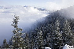 Rogue River-Siskiyou National Forest (Evan Barrientos Photography) Tags: coniferousforests forests habitats jacksoncounty landscapes montaneforest nature northamerica oregon otherkeywords places roguebasin rogueriversikiyounationalforest snow unitedstates wagnerbuttetrail weather