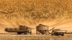 Harvest (Rob Reaburn Photography) Tags: harvest crop wheat farm australia victoria bendigo farming agriculture harvester grain arable agrarian combineharvester johndeere combine cropping paddock grainbin utility ute cereal stubble