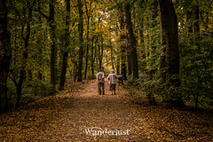 Juntos a la par (Fran Caparros) Tags: wroclaw breslavia poland polska polonia europe silesia lower europa eastern autumm otoño forest bosque pareja love couple amor talking tarde evening hojas leaves path camino cenntenial hall travel viaje vida life aire air