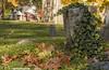 Fallen Leaves & Climbing Plant (rumimume) Tags: potd rumimume 2017 niagara ontario canada photo canon 80d sigma fall autumn stmarks church graveyard sun november outdoors history uppercanada age notl