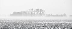 Misty January (++sepp++) Tags: bayern deutschland landscape landschaft landschaftsfotografie lechfeld schnee winter kleinaitingen de snow bavaria germany bw blackwhite monochrom einfarbig schwarzweis nebel neblig fog foggy mist