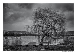 dancing tree on the frosty lake