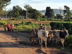 Auf dem Heimweg von der Arbeit_1350484 (fugun) Tags: myanmar birma ochse ochsenkarren bauer heimweg arbeit arbeiter landwirtschaft frauen