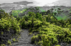 """""""It's amazing how quickly nature consumes human places after we turn our backs on them. Life is a hungry thing."""" ―Scott Westerfeld 🌴 🌋 🌊 (anokarina) Tags: adobephotoshopexpress colorsplash appleiphone5s honolulu hawaii hnl hi oahu tropical island pacificocean volcanoes mountains trees forest volcaniccrater diamondhead steps stairs stairway staircase yellow green ferns 🌴 🌋 🌊"""