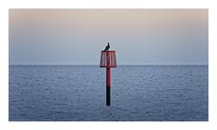 Down Periscope (Myrialejean) Tags: marker buoy bridlington sea seaside coast water waves horizon sky blue red bird pole outdoors level redmarker outfall groyne