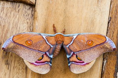 Madagascar-2596-_DSC2173 (beppevig) Tags: madagascar africa animali animals wild butterfly farfalla church chiesa