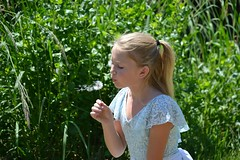 Dandelions (leighla1712) Tags: green dandelion wish magic plant flower floral girl dance ballerina