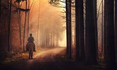early morning ride (Chrisnaton) Tags: forest horse path foggy morningsun morningmood nature horseriding