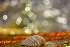 Shell and bubbly bokeh. (agnieszka.a.morawska) Tags: bkhq shell beyondbokeh bokehlicious bokeh helios44m helios44 helios