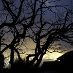 Morgenlicht 003 thumbnail