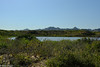 baja estuary (brian eagar - very busy - not much time to comment) Tags: mexico cabopulmo baja nature wildlife outdoor outside january 2018 january2018 warmth sun escape vacation getaway