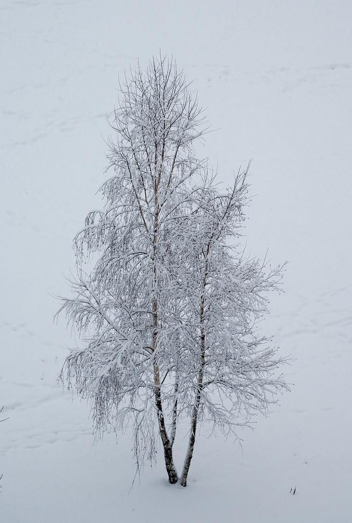 фото: Snowy alone