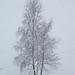 Snowy alone