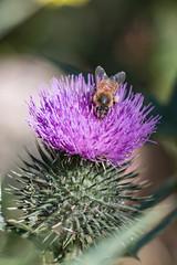 20180122-IMG_5457.jpg (tastigr) Tags: australia afternoon victoria macro wildlife macedonranges summer