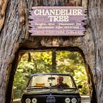 Chandelier Tree thumbnail