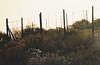 fences in the landscape (g*s*c) Tags: fences sage yarrow sunrise 2018 weeds contrasts lightanddark fencesinthelandscape