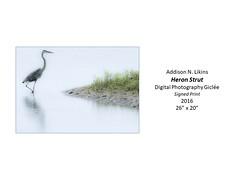 "Heron Strut • <a style=""font-size:0.8em;"" href=""https://www.flickr.com/photos/124378531@N04/39221154335/"" target=""_blank"">View on Flickr</a>"