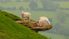 'Mom, get away from the edge !' (DP the snapper) Tags: amusing lamb sheep animals brownclee rock
