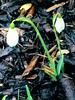 Snowdrops The garden is coming out of hibernation 💤 Hope and new beginnings 🌱 #Snowdrops #Spring #Garden #Pinner (monsoon_sadness) Tags: garden snowdrops pinner spring