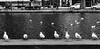 Temps. (Canad Adry) Tags: minolta md zoom 2885mm f35 sony a6000 paris france canal saint martin channel eau water bird oiseau mouette sea gull line ligne noir et blanc black white vintage lens old manual manuel street rue