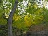 (marjansamyani) Tags: nature tree adventure sky qom iran قم ایران مسافرت طبیعتگردی