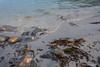 Forsøl Hammerfest 3 (sirpamak) Tags: norway norja hammerfest forsøl syksy autumn beach ranta