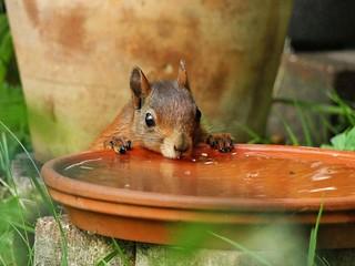 sehr durstig...