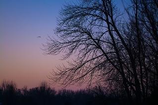 Winter Morn