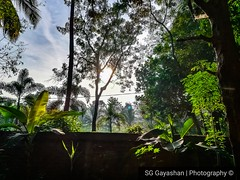 Good morning world (sggayashandj) Tags: photography life morning garden sunlight sunrise fresh world worldwide follow sharp hdr original hot home best beautiful nature village tree mobile
