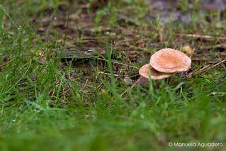 #setas #mushrooms #níscalos #2016 #doñana #huelva #andalucía #españa #spain #naturaleza #nature #viajar #travel #aventuras #adventures #paisaje #landscape #country #textura #texture #photography #photographer #canonistas #canonimagen #CanonForum #canon