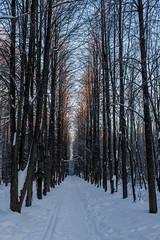 Кировский дендропарк зимой