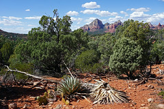 Margs Draw Trail - Sedona, AZ (SomePhotosTakenByMe) Tags: baum tree redrock urlaub vacation holiday usa america amerika unitedstates arizona sedona outdoor margsdraw trail hike wanderung nature natur landschaft landscape