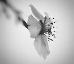 """Ningún """" Escribiendo..."""" me  pone tan felíz como el tuyo. (elena m.d.) Tags: monocromo elena nikon d5600 jardin flor"""