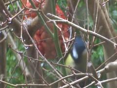 Birds coming into my garden. (Enrico Luigi Delponte) Tags: birds uccelli vogels sonyfuncamera sony