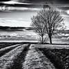 Two by Two... (Ody on the mount) Tags: anlässe bäume em5ii fototour himmel mzuiko4518 omd olympus pflanzen schwäbischealb silhouette wege wolken bw clouds monochrome sw sky trees römerstein badenwürttemberg deutschland de