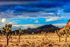 Joshua Tree National Park (aaron_j_o) Tags: joshuatreenationalpark hdr sky clouds nature colour colors contrast yellow weather trees texture storm rocks road red purple plants peace blue desert inspiration green outdoors orange mountain hill
