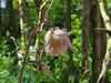 CKuchem-5839 (christine_kuchem) Tags: akelei bienenweide blüte blüten garten insekten nahrung natur naturgarten nektar pflanze privatgarten schatten schattengarten selbstaussaat sommer wildpflanze hell naturnah natürlich rosa weis wild