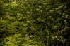 sueño verde (Loló Arias) Tags: selva verde naturaleza nature documental documentalism documentar d90 fotografiadocumental fotografia reportaje cuba