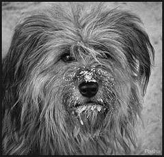 winter dog (pavelfadeevv) Tags: winter dog photo photography portrait character people studio mood girl bw still art color monochrome blackandwhite blackandwhitephotography stilllife beautiful beauty wooden vintage background light brutal drink food fruit berries glass cup flowers plants nature coffee morning