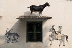 Varanasi 2017 (Ravikanth K) Tags: 500px varanasi kasi wall painting art wallart doodle drawing goat up domestic animal window horse rabbit hunter king india cwc cwc623 hunting street streetphotography chennaiweekendclickers