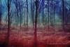 C'è un piacere nei boschi senza sentieri (Gianni Armano) Tags: c'è un piacere nei boschi senza sentieri foto gianni armano photo flickr