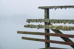 into the mist (Wanda Amos@Old Bar) Tags: lichens newzealand abandoned fog haiku mist old water wharf